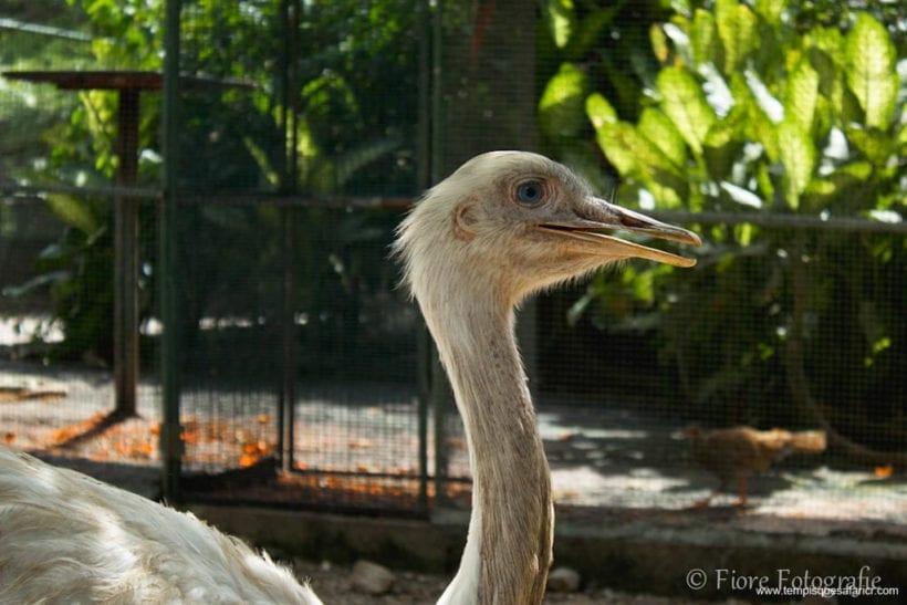 Fotos-Tempisque-Safari-2012-21